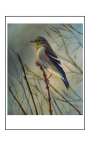 Birds of Michigan Finch Card by Yeshua's Child Art