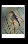 Birds of Michigan Finch Card by Yeshua's Child Art