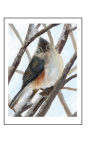 Tufted titmouse original art card by Yeshua's Child Art
