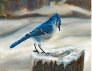 Curious blue jay looking at ice on a stump