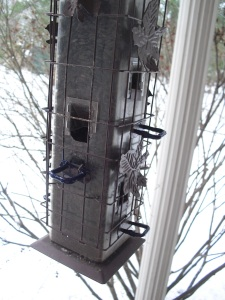 bird feeder with perches coated with plastic