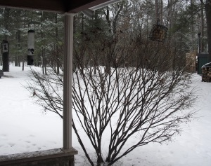 Michigan yard covered with snow